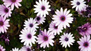 【癒しのパワーがある「花」】花選びに使える「誕生花」と「幸せの花言葉」366日【2月21日-29日編】~「あなた」や「あなたの大切な人」の生まれた日は「どんな花・性格」ですか~